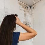 Property Damage Restoration Mold Removal Miami Broward Palm Beach